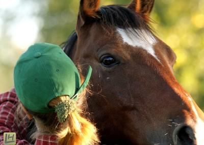 Pferde Shiatsu Niederrhein